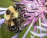 Pollinator and Beneficial Insect Conservation Short Course