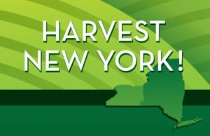 Harvest New York