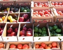 Guide on How To Purchase at New York State Produce Auctions
